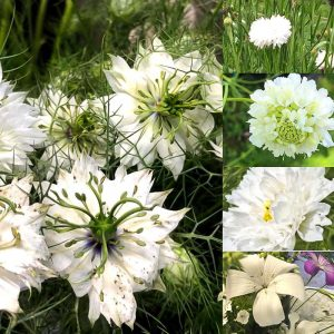 Flowers showing our white cut flower seed collection